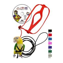 Pettorina Aviator per piccoli pappagalli come: parrocchetti dal collare, port lincoln, roselle, ara nobile, conuro del sole, pap