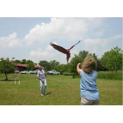 Sistema per il volo libero dei pappagalli