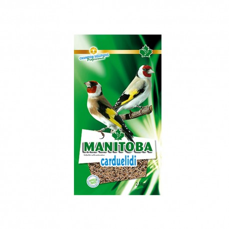 Carduelidi - Manitoba