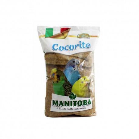 Cocorite Bisquit Manitoba