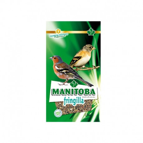 Fringilia - Manitoba