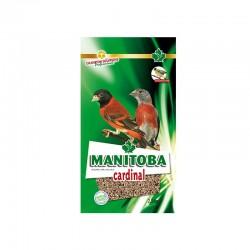 Cardinal - Manitoba