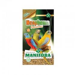 Neophema Parakeets Manitoba