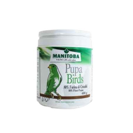 Pupa Birds