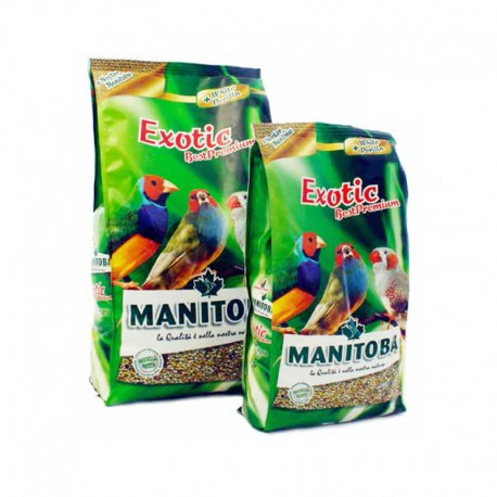 Exotic Best Premium Manitoba