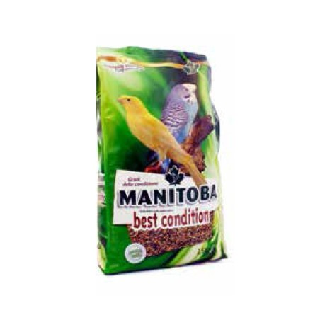 Best Condition Manitoba - Semi della salute