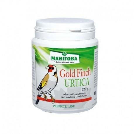 Urtica Goldfinch Manitoba