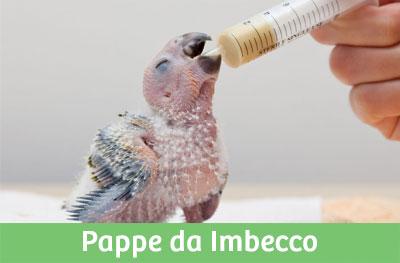 Pappe da Imbecco